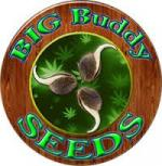 Logo Big Buddy Seeds