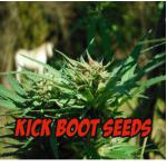 Logo Kick Boot Seeds