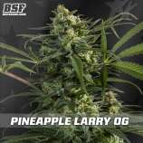 Pineapple Larry OG