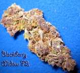 Blackberry Widow