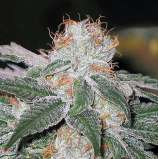 White Weed