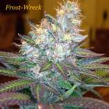 Frost-Wreck