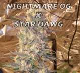 Nightmare OG x Star Dawg