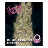 Blue Forest Berry Autoflowering