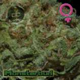 Monsterbud