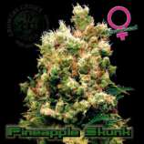 Pineapple Skunk