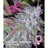 Silver Grape Sherbet