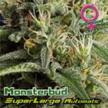 Superlarge Monsterbud Autoflowering
