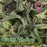 Superlarge Sweet Cheese Autoflowering