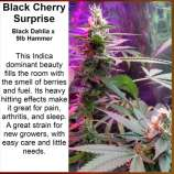Black Cherry Surprise