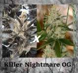 Killer Nightmare OG