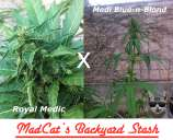 Medi Royal