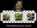 Promiscuous Kush