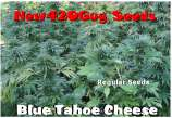 Blue Tahoe Cheese