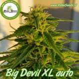 Big Devil XL