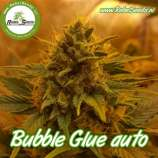 Bubble Glue Auto