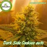 Dark Side Cookies Auto