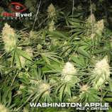 Washington Apple