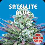 Satellite Blue