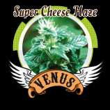 Super Cheese Haze