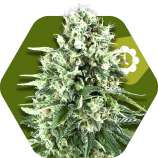 Super Silver Haze Automatic