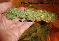 Blue Tahoe Cheese (Picture from New420Guy..)