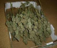 Picture from MrQnQ (Big Bud)