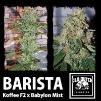 Picture from OldDutchGenetics (Barista)