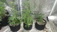 Pic for Auto Tutankamon (Pyramid Seeds)