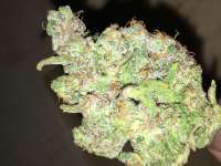 Picture from Growgod (Hindu Kush)