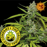 Grab Barney Farm Sweet Tooth Auto with a discount - While Stocks Last !