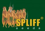 Logo Spliff Seeds