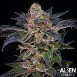 Alien Genetics Apple Toffee
