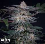 Alien Genetics Orange Freeze