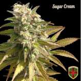 All-in Medicinal Seeds Sugar Cream