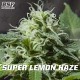 Super Lemon Haze