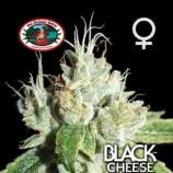 Black Cheese