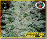 Freeze Cheese \'89