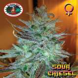 Big Buddha Seeds Sour Chiesel