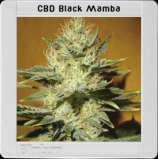 Black Mamba CBD