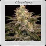 Chocolopez