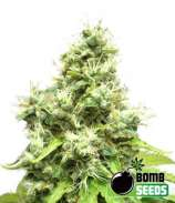Medi Bomb #1