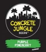 Purple Pineberry