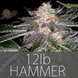 Exclusive Seeds 12lb Hammer