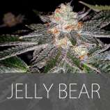 Exclusive Seeds Jelly Bear
