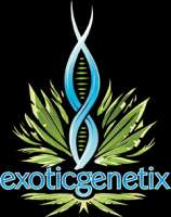 Exotic Genetix 3 In The Pink