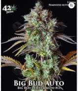 Big Bud Auto