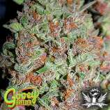 Gooey Breeder Seeds Lemendhaze
