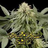 Green House Seeds White Rhino