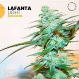 Lafanta Light